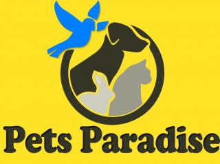 Pets-Paradise-Jalandhar